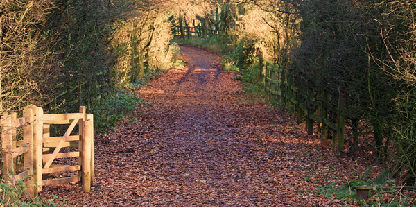 Leafy path in Sandwell Valley Country Park